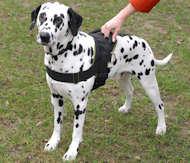 nylon dog harness for dalmatian breed