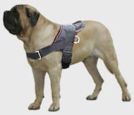 Old English Mastiff Nylon multi-purpose dog harness pulling