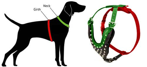 how to measure harness