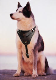 Siberian husky dog harness for tracking ,walking,training