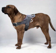 Tosa inu nylon dog harness/Japanese Mastiff nylon dog harness