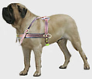 large dog harness for Old English Mastiff