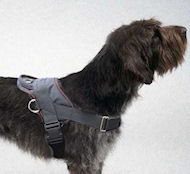 Wirehaired Pointing Griffon Nylon dog harness